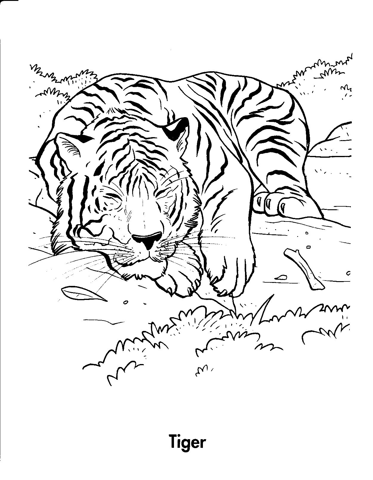 jungle Tiger Coloring Pages for kids | Animal coloring ...