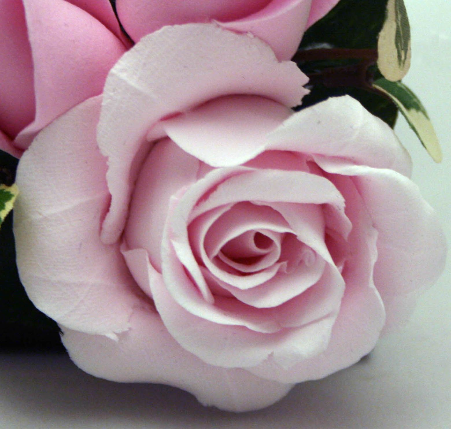 The Flower Of Delta Zeta Is The Pink Killarney Rose Delta Zeta