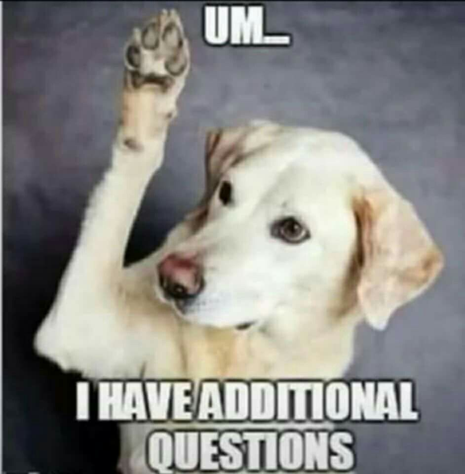 Dog meme questions | Funny dogs, This or that questions ...