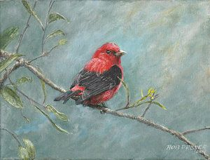 Birds Painting - Scarlet Tanager by Rob Dreyer AFC