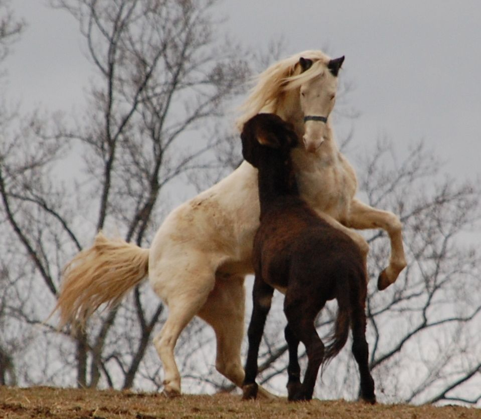"""Turn-out day for Threat's Medicine Man aka """"Ghost"""".  Found a old photo of the best horse in the world so glad he is ours now!"""