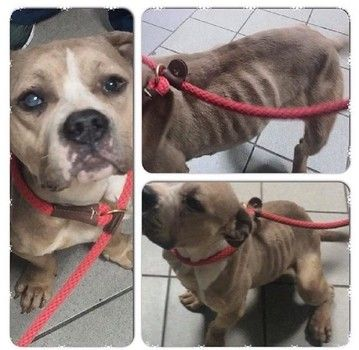 Dog Discovered Living In Shoddy Wooden Box In New York Please Help Maddy S Rescuers With Her Crippling Vet Expenses Thank You Poor Dog Dogs Dog Stories
