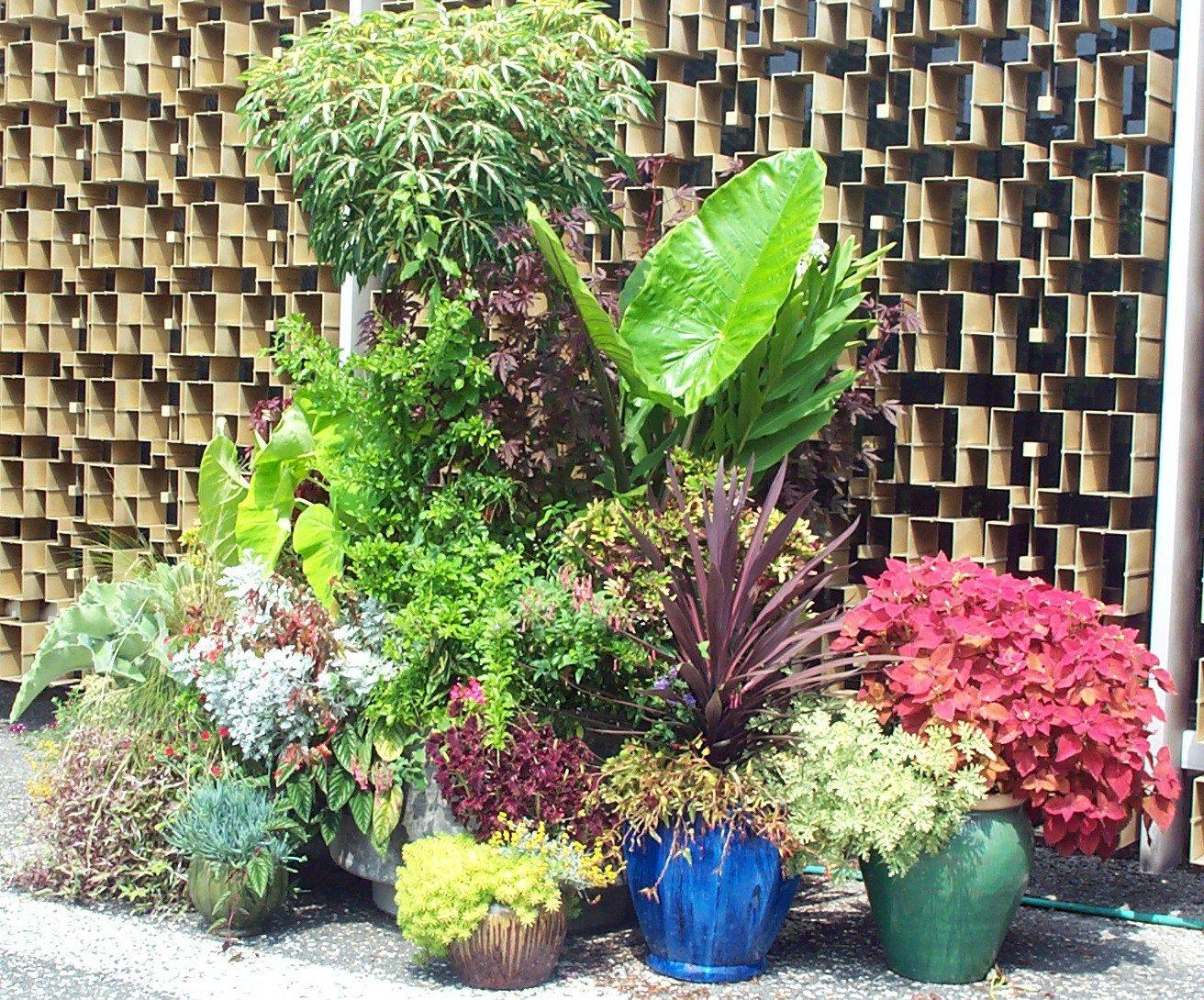 aug 28 050jpg 13121090 pixels Gardening Pinterest Patios
