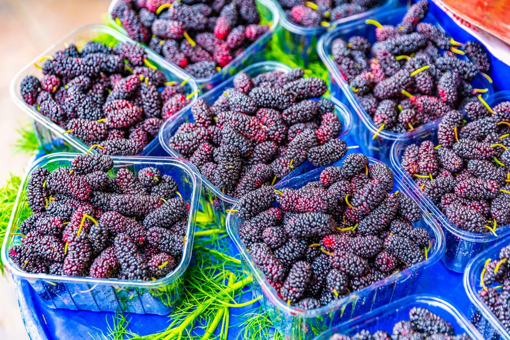 Mulberries how to grow this coveted fruit