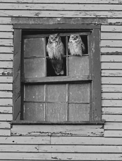 from TheRuggedBlog. Love me some owls.
