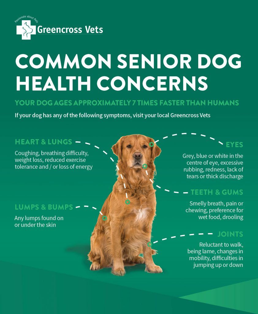 Dog Health Dog Health Issues By Breed Dog Health Questions And