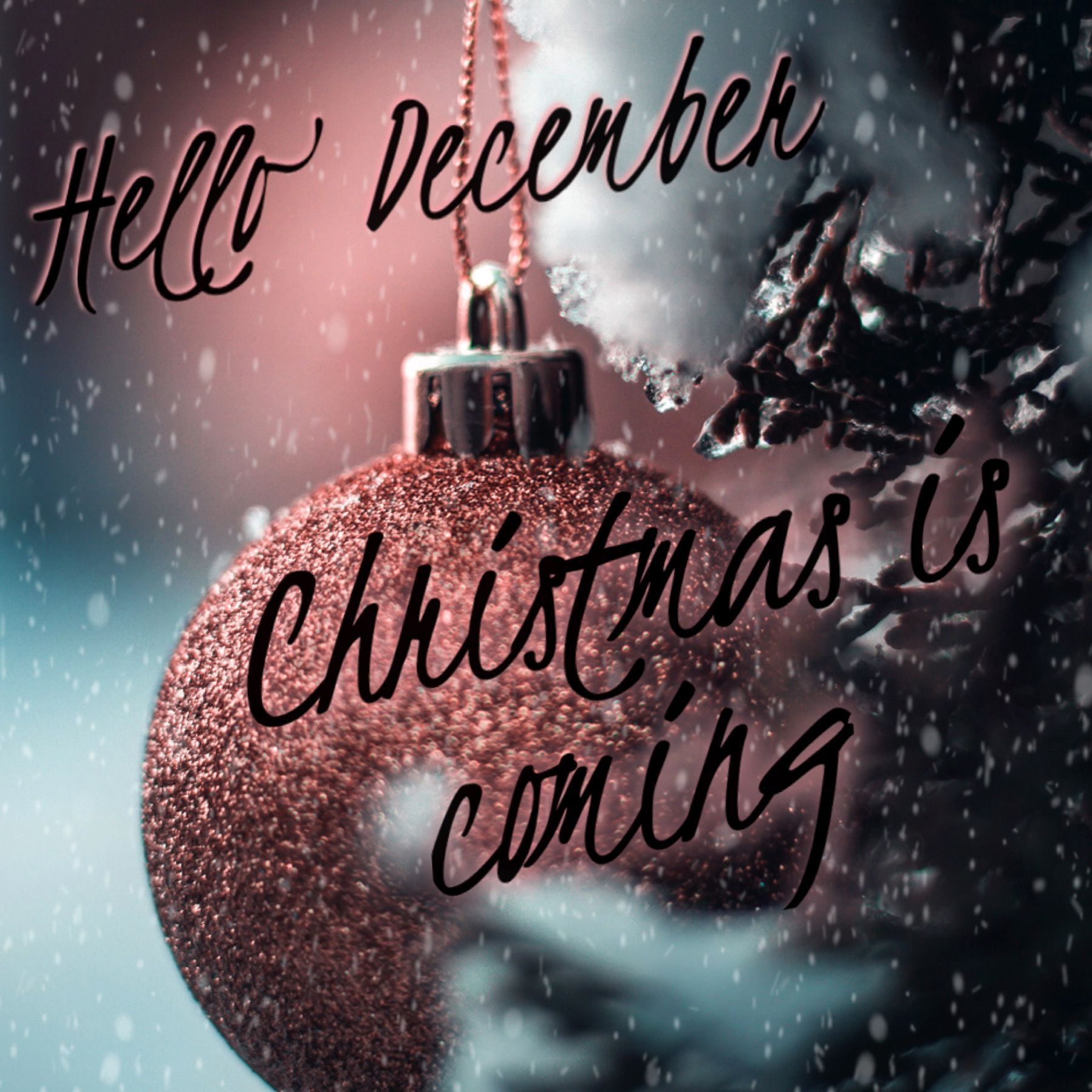 Hello December #hellodecemberchristmas Hello December Christmas is coming #hellodecemberchristmas Hello December #hellodecemberchristmas Hello December Christmas is coming #hellodecemberchristmas Hello December #hellodecemberchristmas Hello December Christmas is coming #hellodecemberchristmas Hello December #hellodecemberchristmas Hello December Christmas is coming #hellodecember Hello December #hellodecemberchristmas Hello December Christmas is coming #hellodecemberchristmas Hello December #hel #hellodecemberchristmas