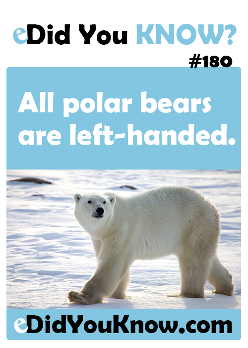 10 Things You May Not Know About Polar Bears - Happy Polar Bear ...