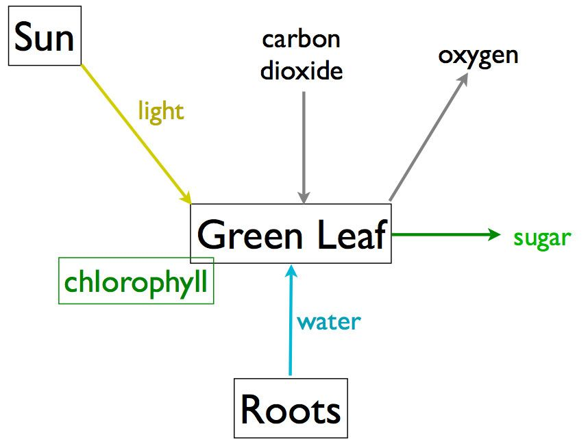 Photosynthesis diagram labeled phineas and ferb cake on pinterest photosynthesis diagram labeled phineas and ferb cake on pinterest ccuart Image collections