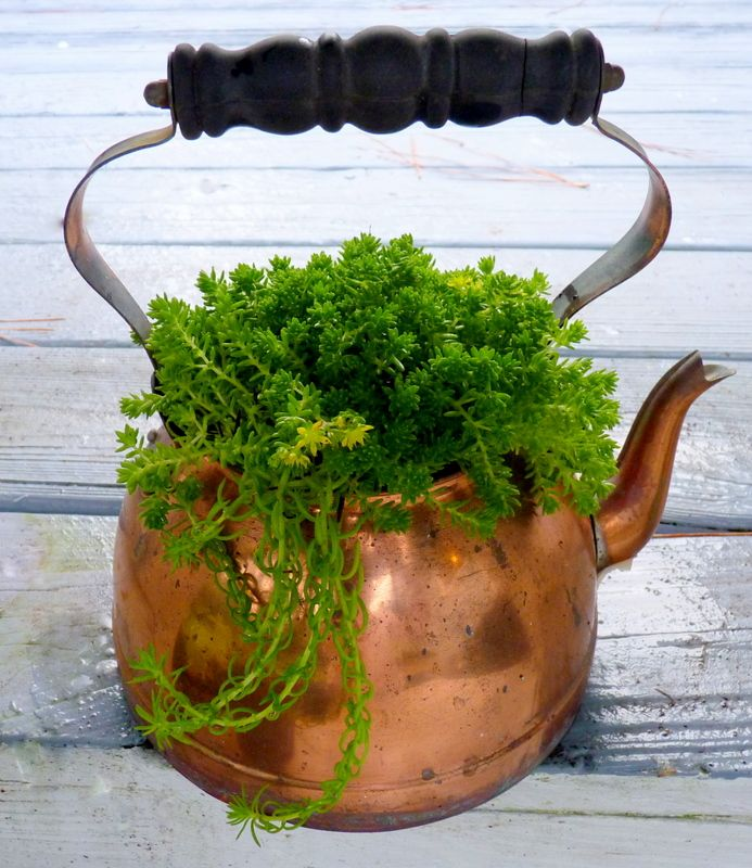 Teapot Planters: An Old Copper Tea Pot. If You Use Metal Containers For