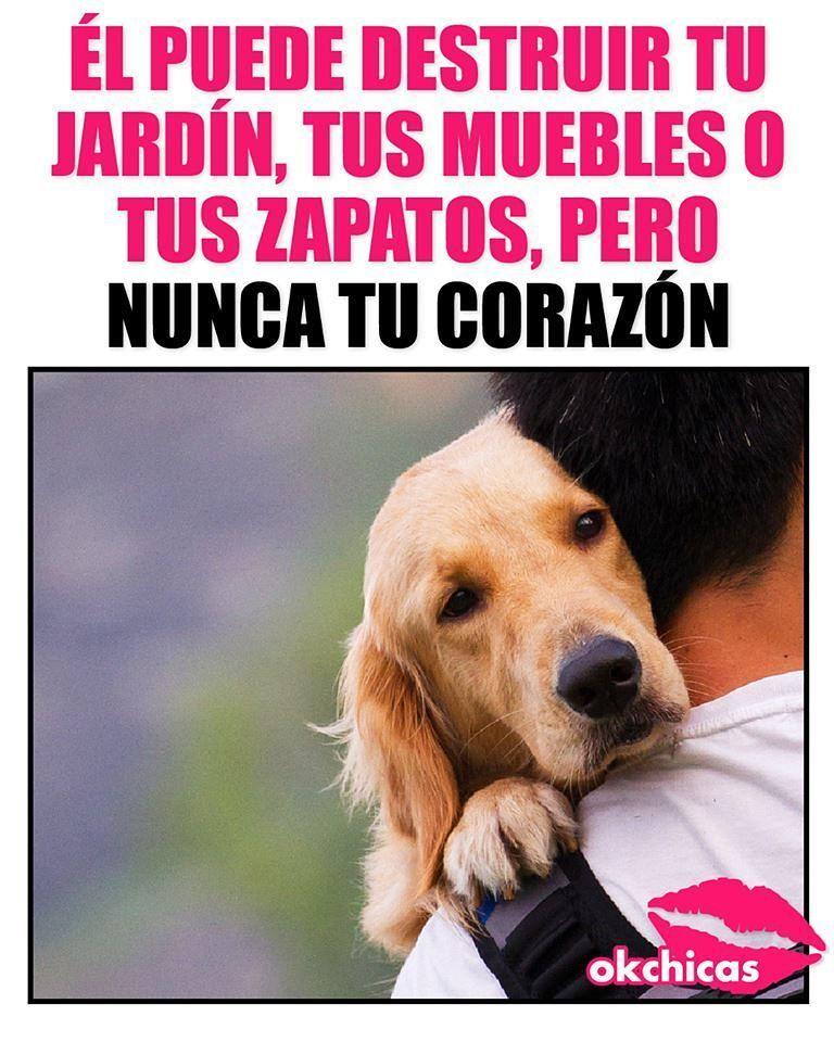 Jamas Perritos Mascota Amor Perros Tristes Perros Frases Animales Frases