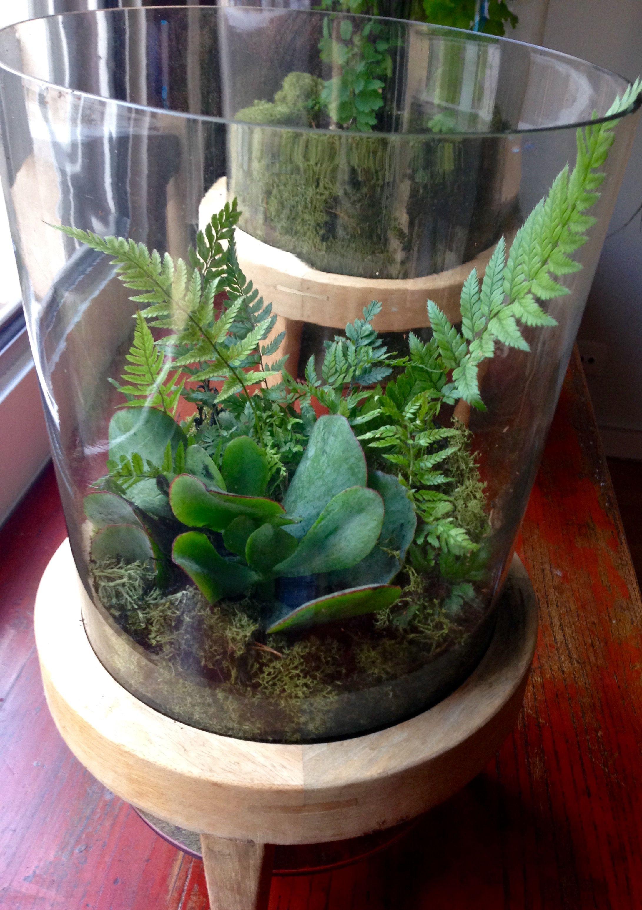 Discover Ideas About Succulent Terrarium