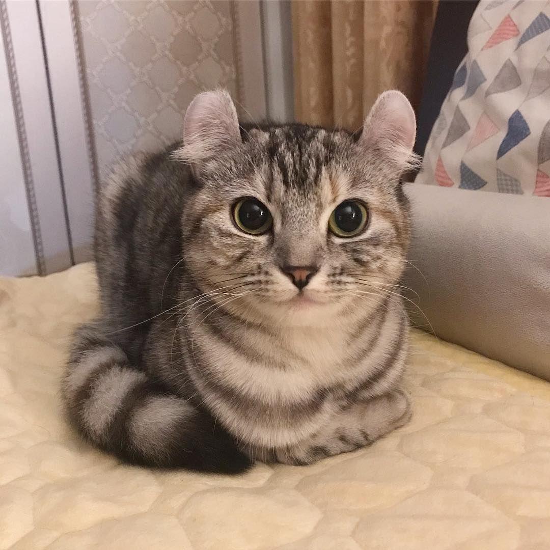 Полосатые породы кошек: описание, характер, отношение к семье и детям | 1080x1080