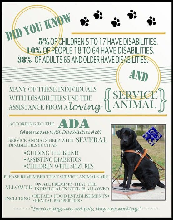 Service Dogs Service Animals Emotional Support Animal Service