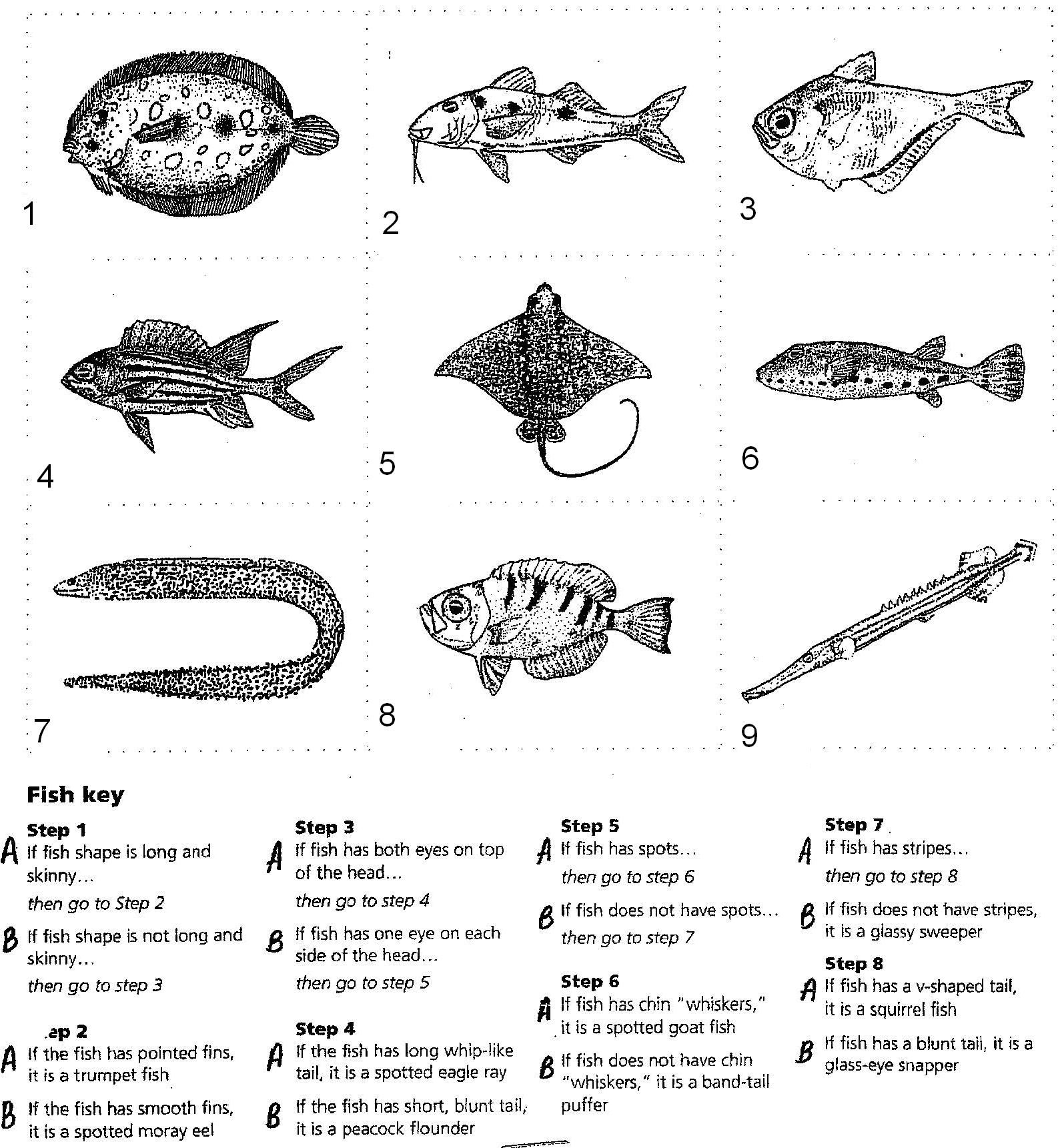 how to make a dichotomous key for animals