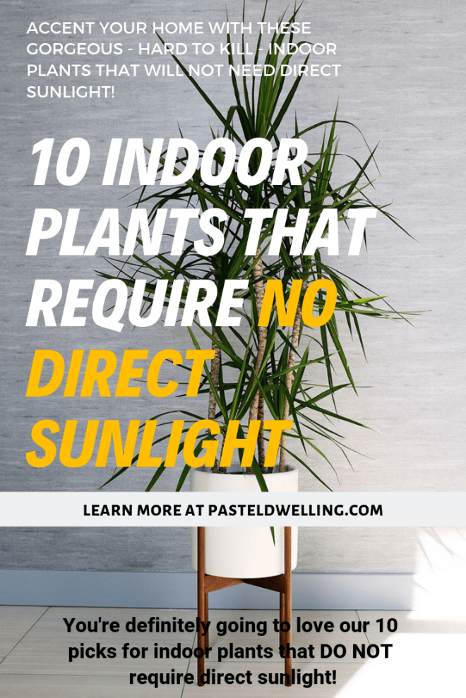 10 Indoor Plants That You Can Grow That Require No ...