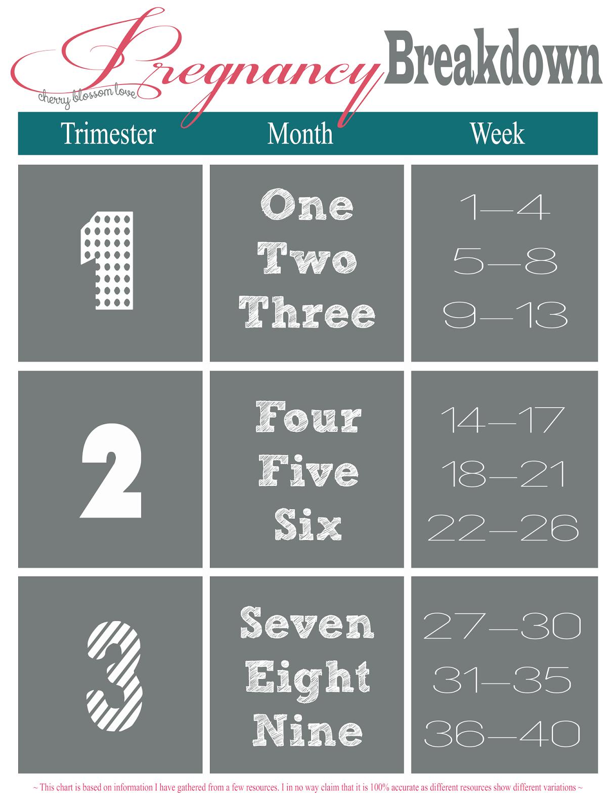 medium resolution of pregnancy breakdown in trimesters months and weeks