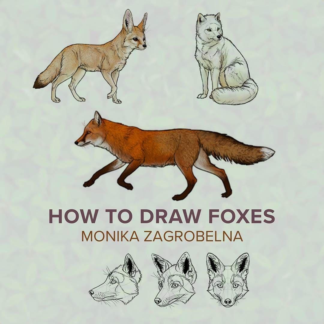 Our Animal Illustration Expert Monika Zagrobelna Can Draw