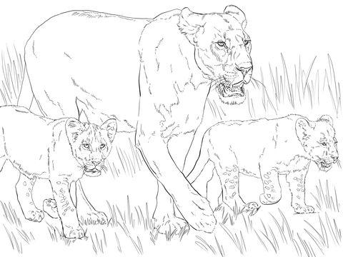 Leona con crías Dibujo para colorear | animales | Pinterest ...