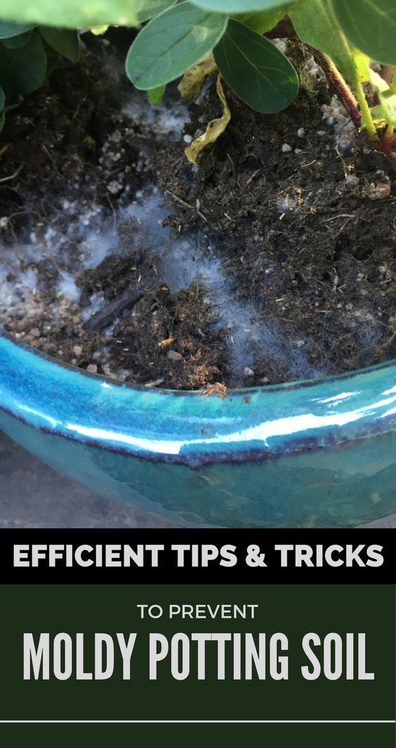 Certainly You Don T Need To Add Mold To The List Check Your Plants Now And Use These Effective Tips And Tricks To Prevent Moldy Pott Potting Soil Soil Plants