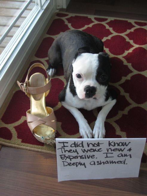 Shame Your Pet   Dog Shaming • Cat Shaming   Shame Your Pet  …