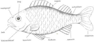 hier zie je zowat de delen of zo een vis vissen