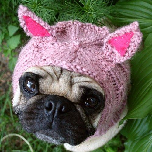 6e072142251 It s a pig! It s a pug! It s a Pig-Pug!