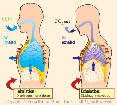 live your life with healthy lungs lungs and nurse stuff rh pinterest com Inhalation Diagram Lungs Inhaling and Exhaling