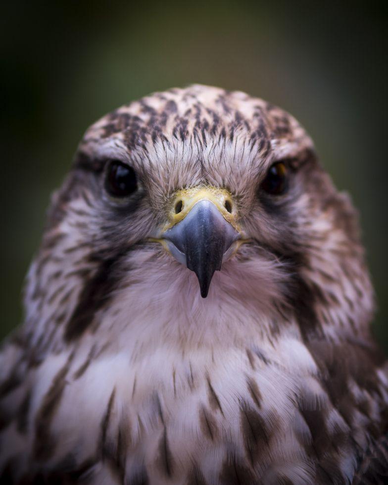 Falke Raubvogel Falkner Botanischergarten Bochum Ruhruni Pflanzen Bluten Blooming Picoftheday In 2020 Animals Owl Bird