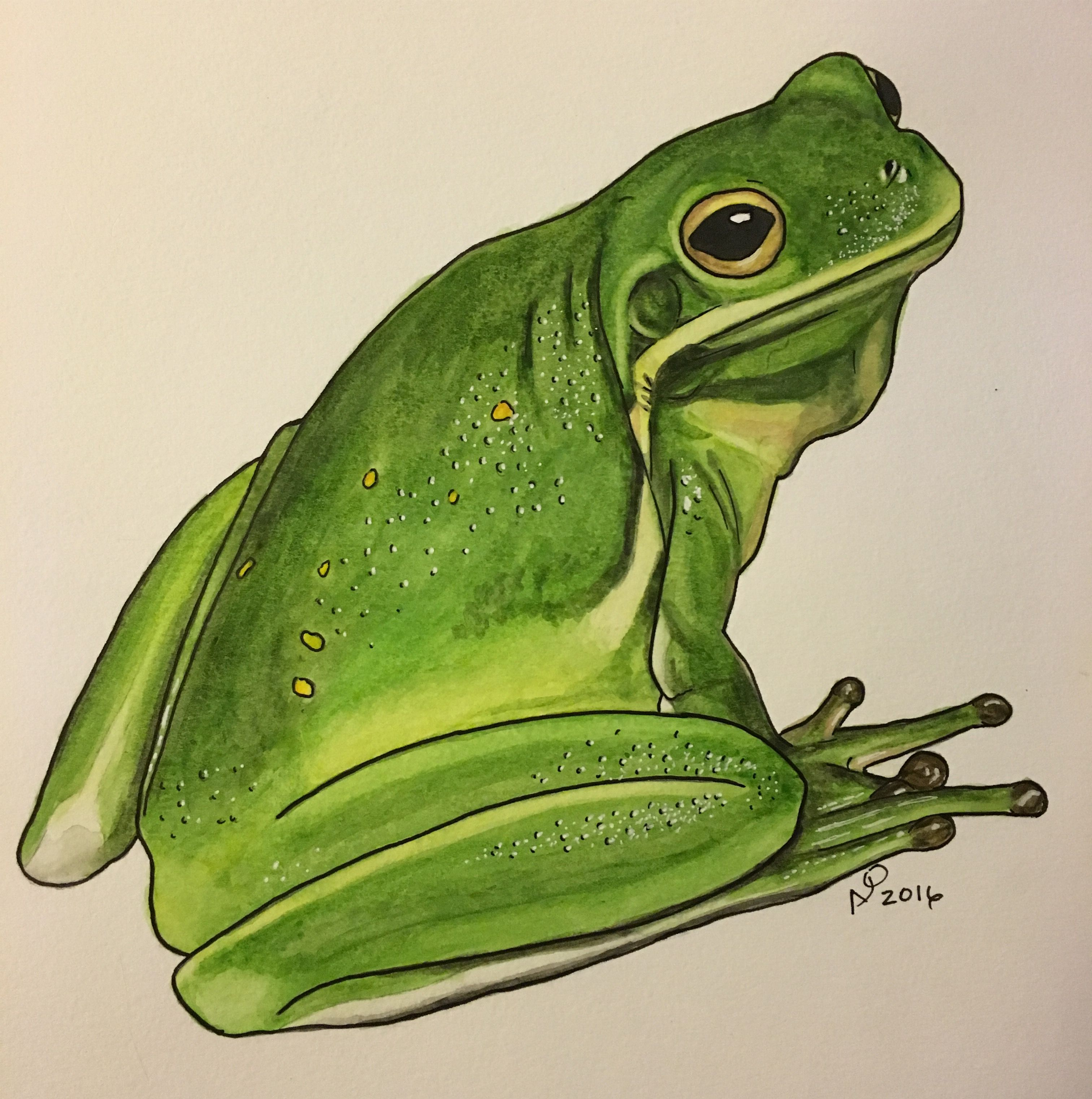 Green Tree Frog Watercolor 9x12 With Images Green Tree Frog
