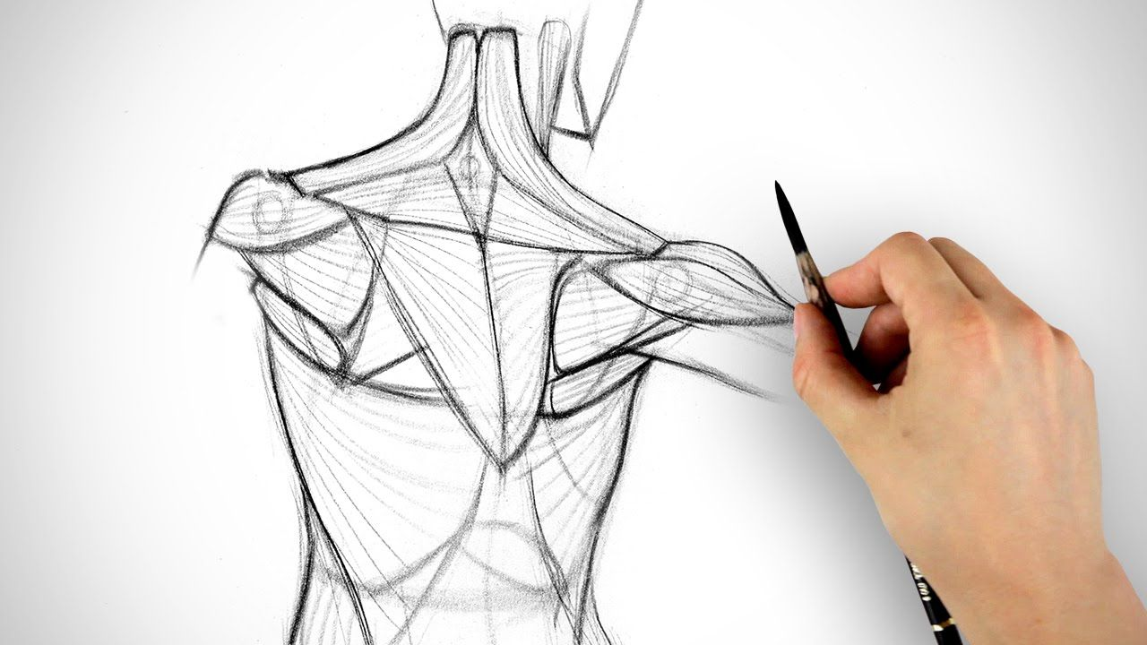 How To Draw The Shoulder Bones Drawing Techniques Pinterest