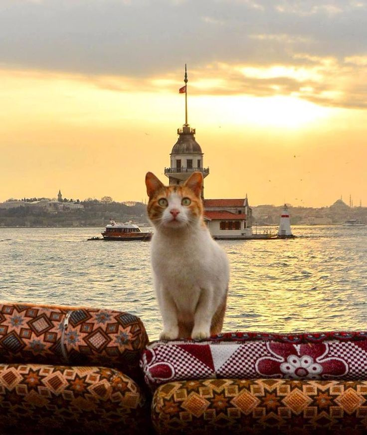 Cats from Istanbul {Turkey}
