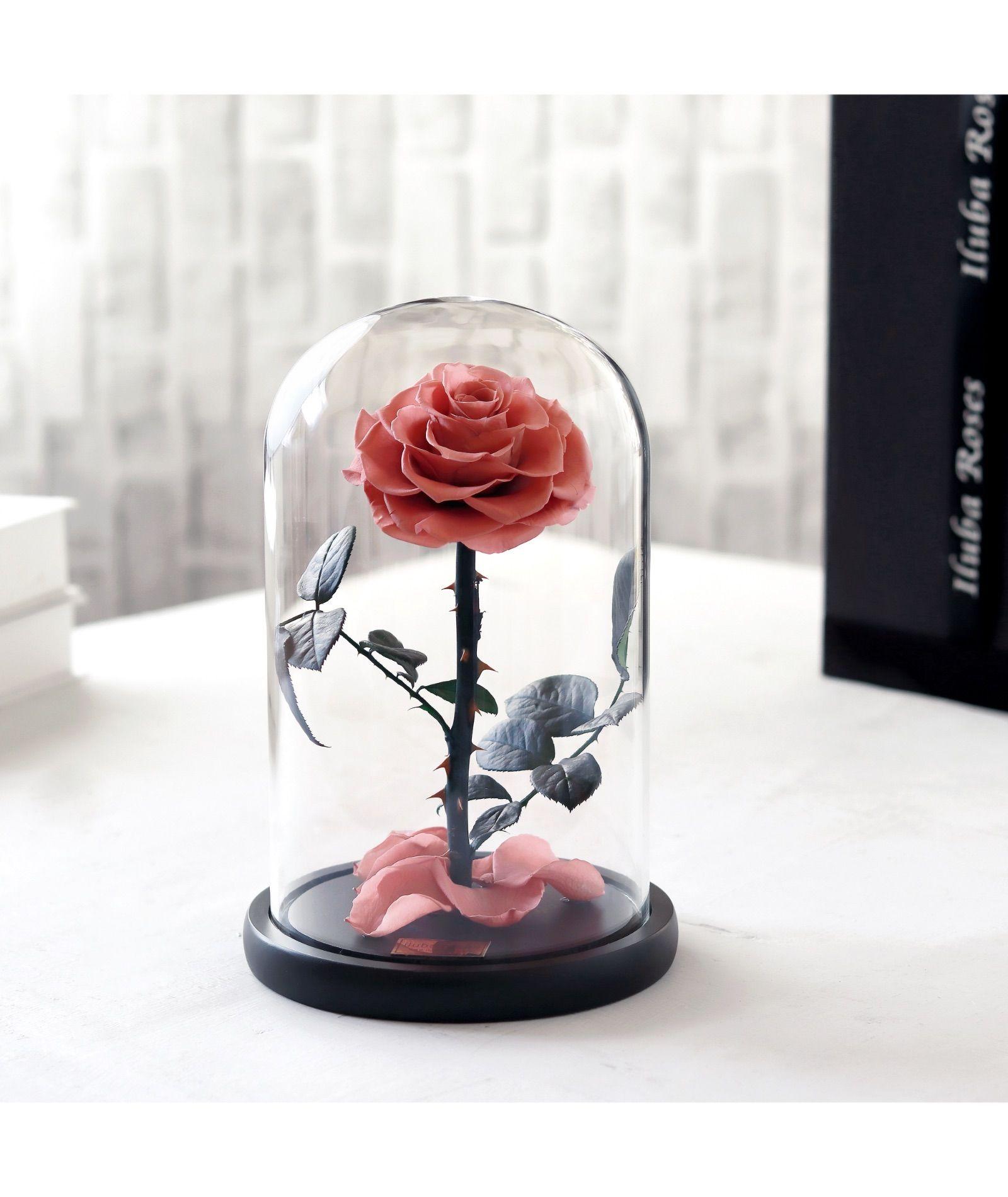 وردة ايلوبا روز لون بانتوني داخل فازة زجاجية Rose Snow Globes All Things