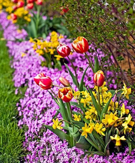 Spring Flowers And Yard Landscaping Ideas 20 Tulip Bed: Tulip Tips From Chicago Gardeners