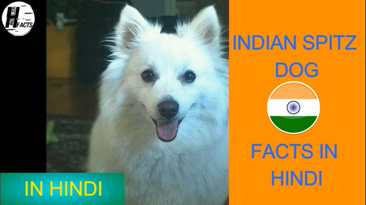 77+ Samoyed Dog Price In Delhi in 2020 Dog facts