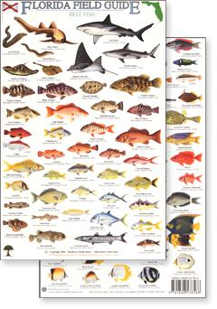 Florida Reef Fish Field Guide Rainforest Publications Rfp009 6 95 Category Rainforest Publications Field Guides Florida Fish Aquarium Gifts Fish Chart
