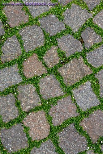 Stock Photo Titled Paving Stones With Grass Unlicensed Use