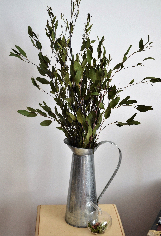 Dried eucalyptus green silvery foliage 5 stems cornish