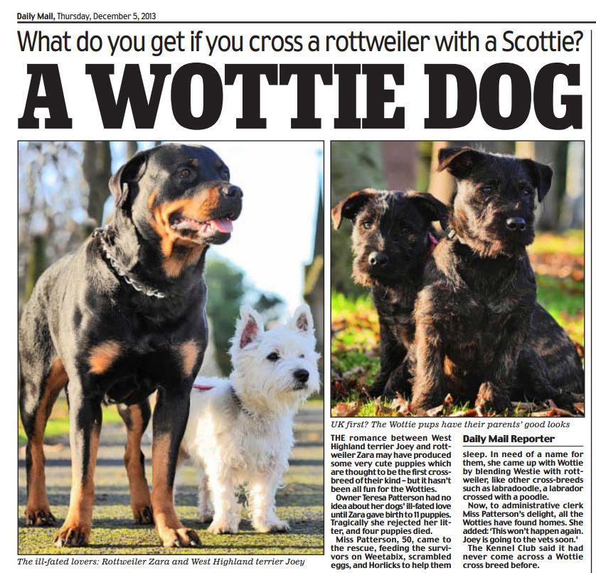 Male Westie and female Rottweiler create a Wottie