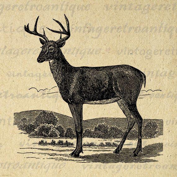 Antique Deer Graphic Digital Printable Image Deer Illustration Download Vintage Clip Art Jpg Png Eps 18x18 HQ 300dpi No.2201 @ vintageretroantique.etsy.com