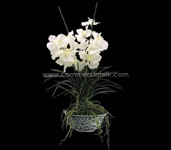 Vanda Orchid - Exuding charm and elegance!