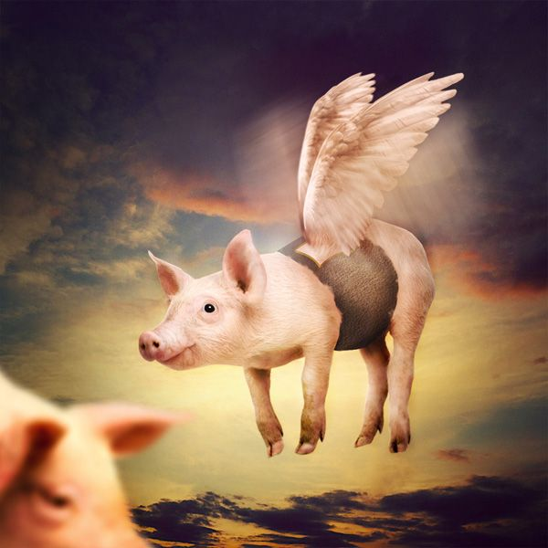 Photo Manipulate a Cute Flying Pig Scene