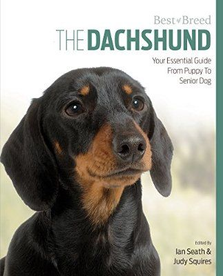 The Dachshund Your Essential Guide From Puppy To Senior Dog Best