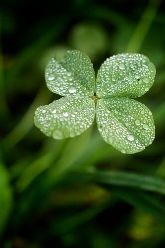 When the sun shines, drops of dew will disappear.  Life is like a drop of dew.