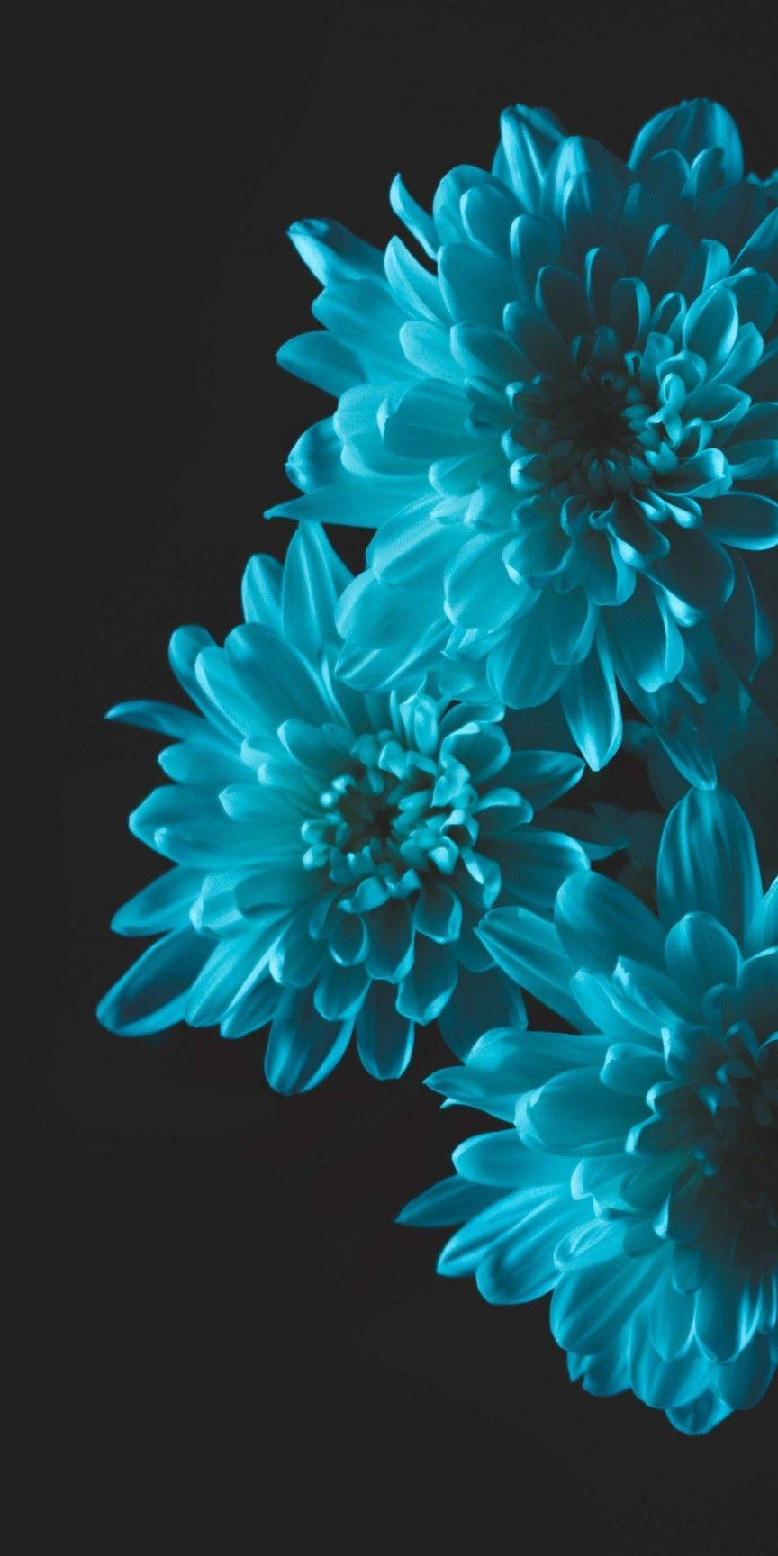 Black Background Wallpaper Flower Iphone Wallpaper Flower Phone Wallpaper Purple Flowers Wallpaper