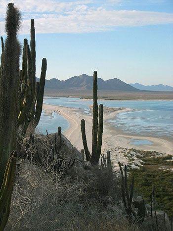 El Parque Nacional Isla del Tiburón, es área natural perteneciente al municipio de Hermosillo, en el estado de Sonora, México y se localiza en el Golfo de California. La isla del Tiburón, se muest…