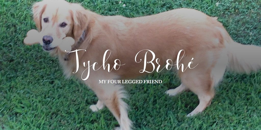A story told with Adobe Spark Doggy, Golden retriever