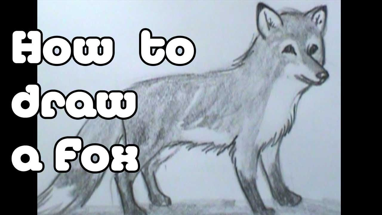 Tutorials Pinterest How To Draw, To Draw And Foxes Tutorials Pinterest How  To How To