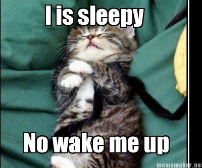 Funny Cat Meme Generator : Good night kitty funny~cats pinterest kitty animal and cat