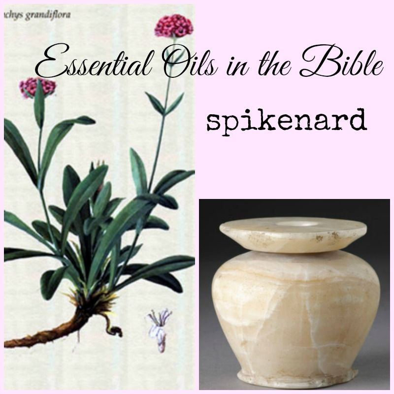Spikenard Mark 14 3 And Being In Bethany In The House Of Simon The